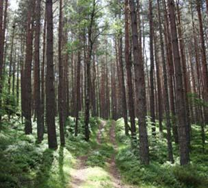 Unearth Ancient Forests And Trees In Scotland