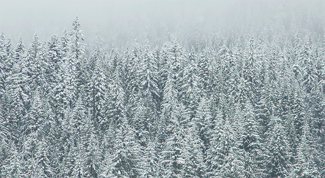 10 Signs You Cant Wait For Winter