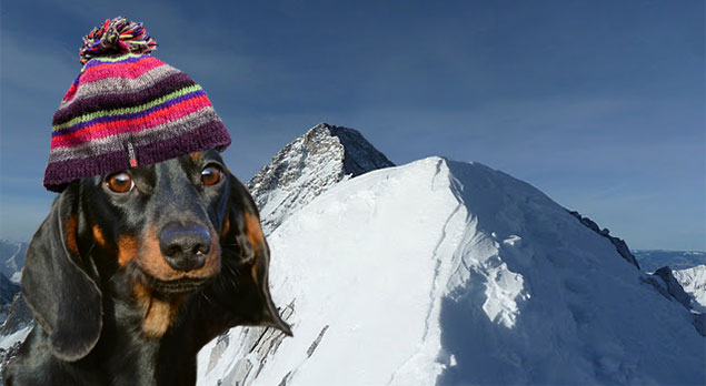 K2 to be Renamed K9 After Dog Makes Successful Winter Ascent