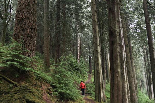 Black Gates Forest
