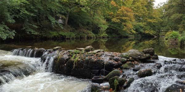 Salmon leaps at Drogo's Weir
