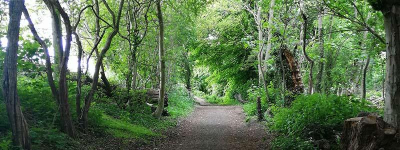 Manchester trail running