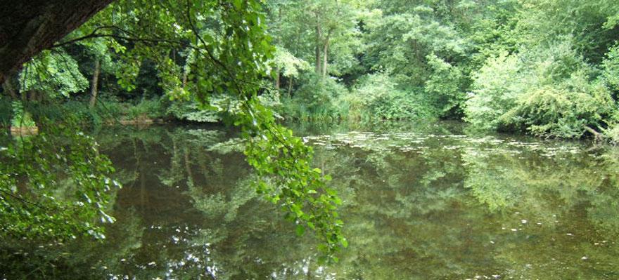 Lake Brockhill